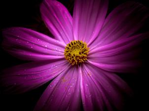 flower+1.jpeg