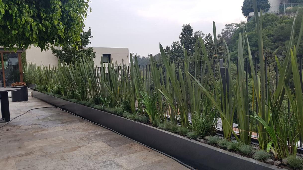 Barrera vegetal