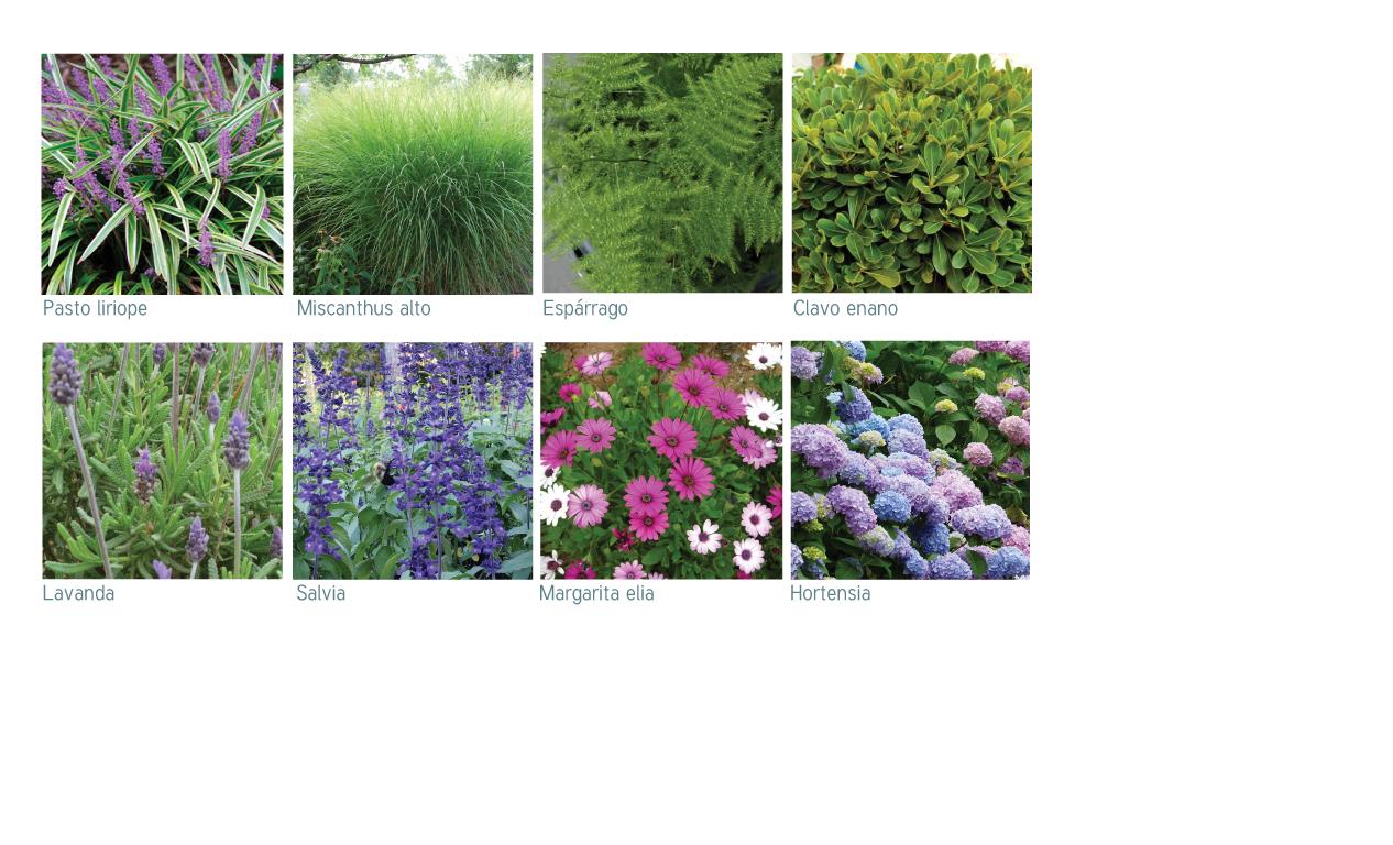 Paleta vegetal detalle