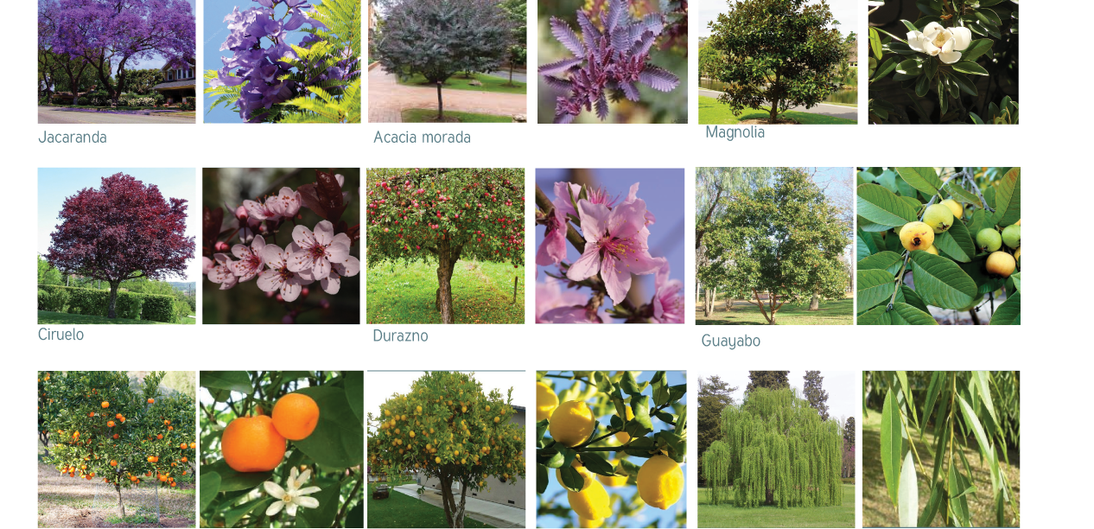 Paleta vegetal de árboles
