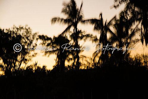 Sunset #4