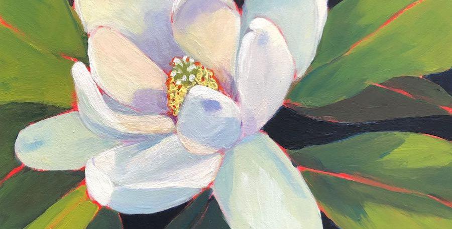 Sweet Bay Magnolia 3