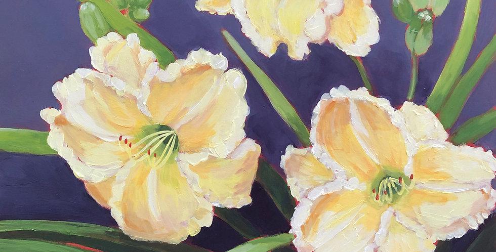 Omomuki Daylilies