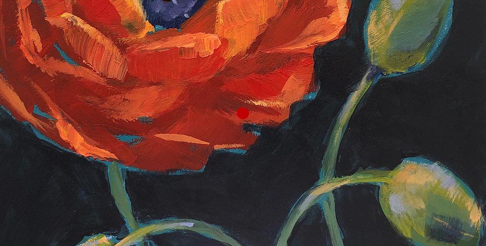 Red-Orange Poppy