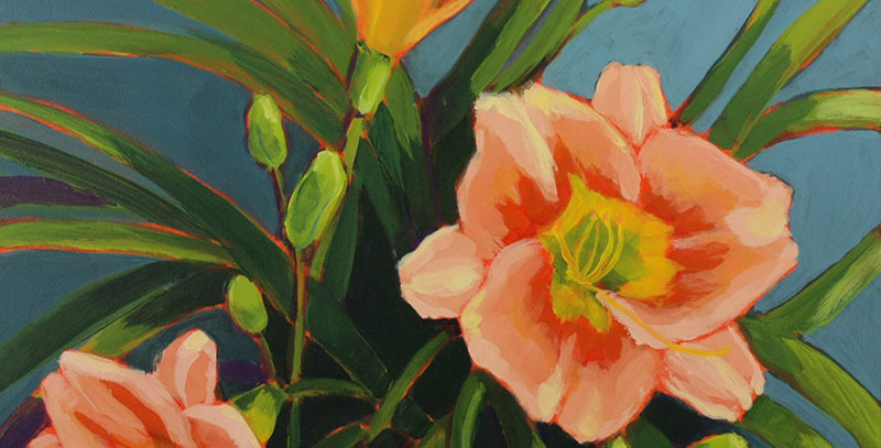 Peach Blast Daylilies
