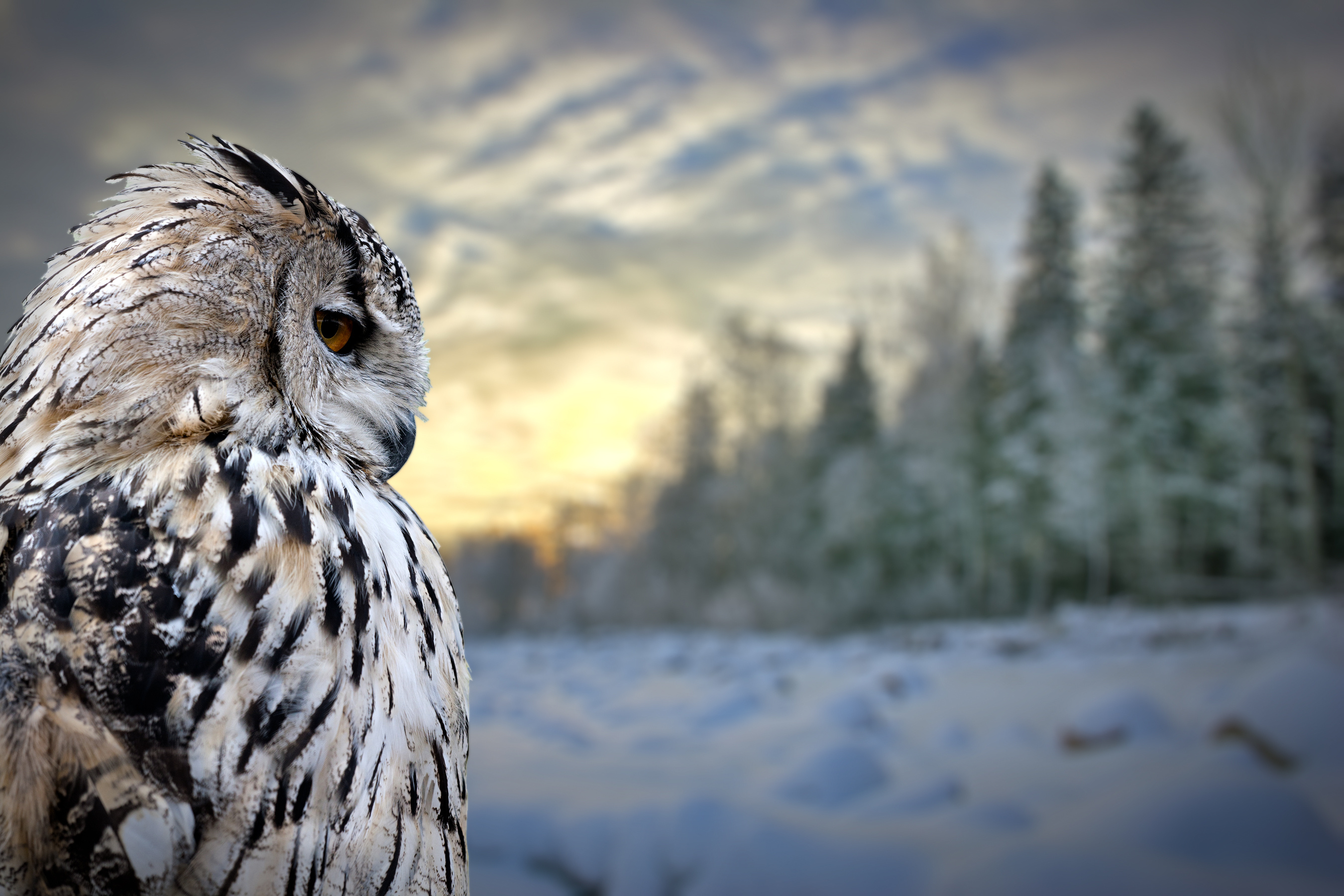 Totem Animal Medicine