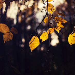 Podzimní brigáda na hřišti