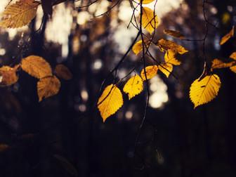 秋のスケジュール発表