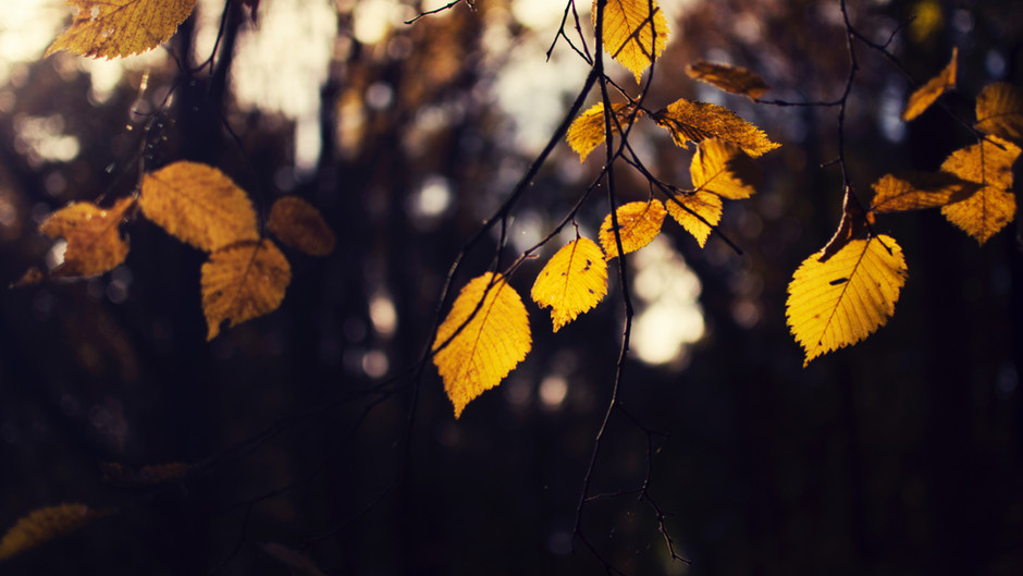 Seasonal Living: A Love Letter to Autumn