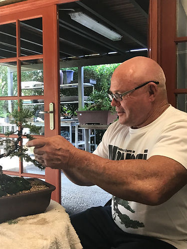 Roger Lunt Bonsai Man