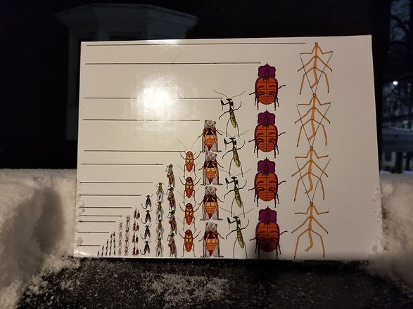 4 hornets.jpg