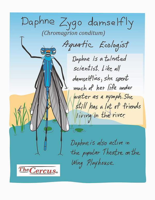 Daphne Explained-05.jpg