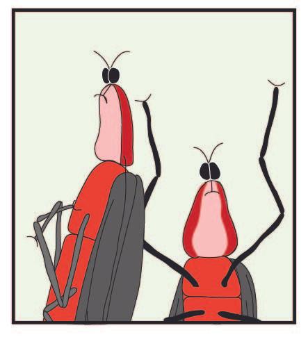 Lovdbugs