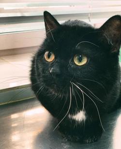 Наш посетитель - кот с цветными усами