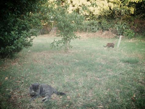 Mačka Island: Leah Chamberlain