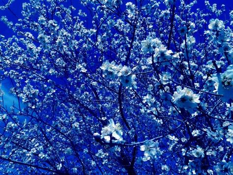 Mother Tree: Paul DesCombaz