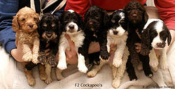 Previous Litters