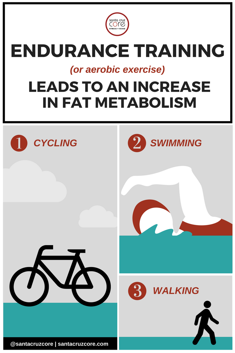 Fat Metabolism meme