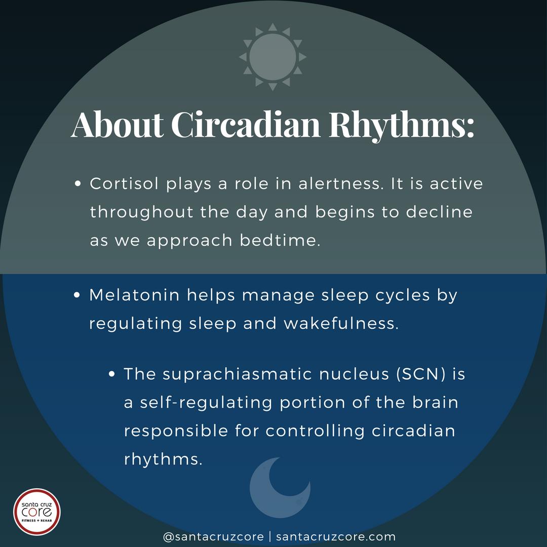 circadian-rhythms-explained-meme_santacruzcore