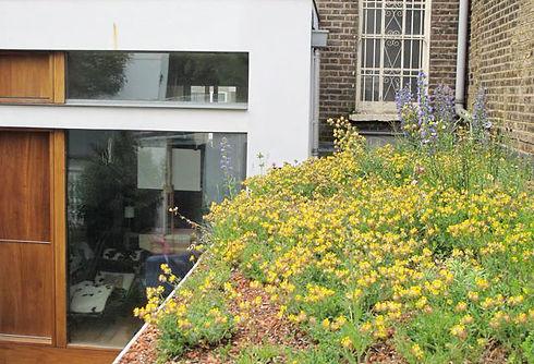 mildmay park - green roof.jpg