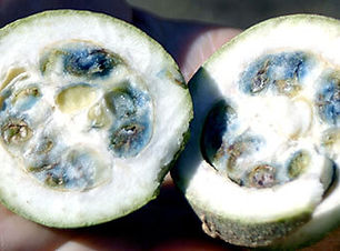 jagwa-un-fruit-tropical-amazonie.jpg