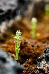 Plants Matter II_049.jpg