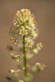 Plants Matter II_002.jpg