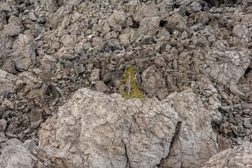 Plants Matter II_015.jpg