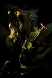 Plants Matter II_028.jpg