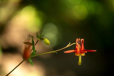 Plants Matter II_020.jpg