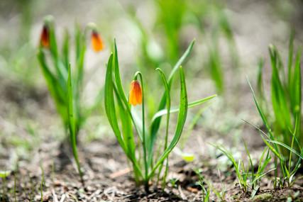 Plants Matter II_019.jpg