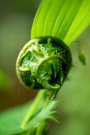 Plants Matter II_012.jpg