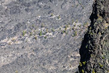 Plants Matter II_033.jpg