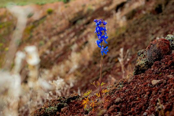 Plants Matter II_051.jpg