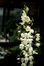 Plants Matter II_029.jpg