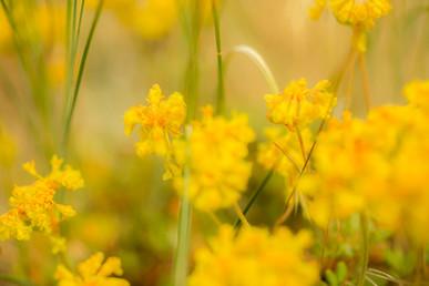 Plants Matter II_040.jpg
