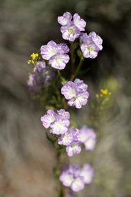 Plants Matter II_001.jpg