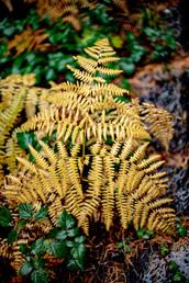 Plants Matter II_039.jpg