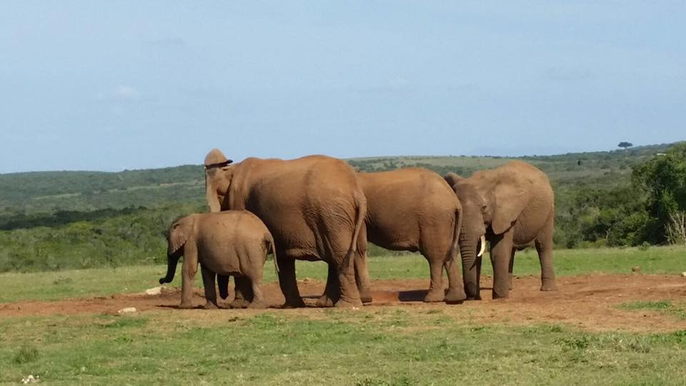 Elefanti Sudafrica | Ciak Viaggi