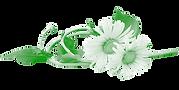 Dandelion-Green.png