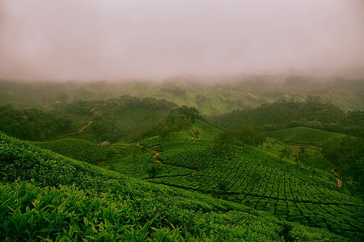 Farm%20Fields%20of%20Munnar_edited.jpg