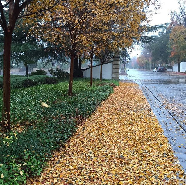 Photo of a rainy, autumn street: sidewalk covered with golden leaves and a hint of morning mist.