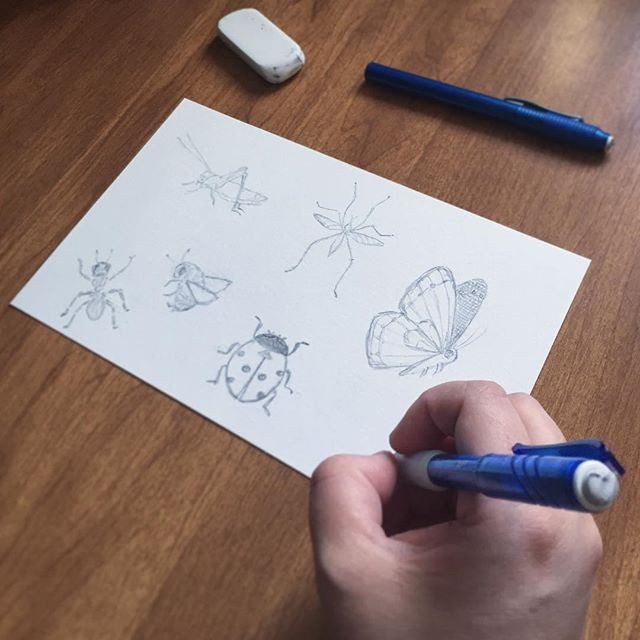 Kimberly sketching six different insects in pencil.