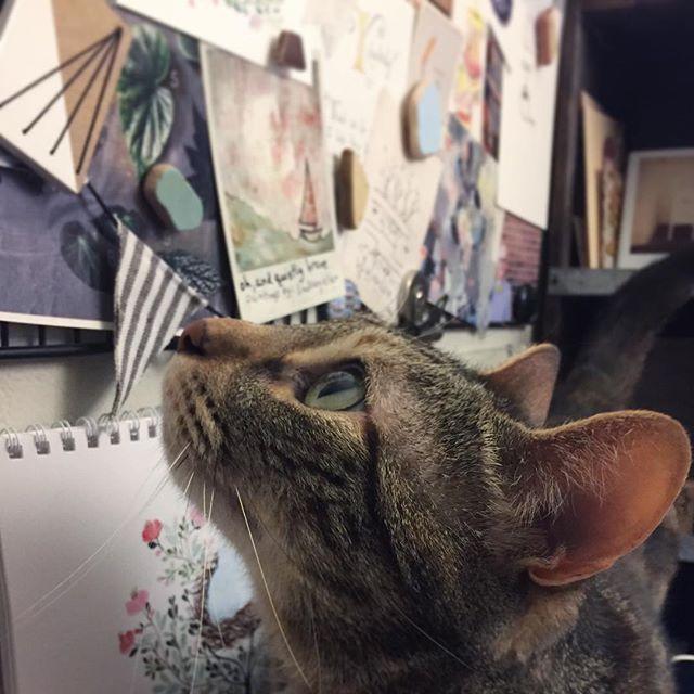 Nadia, my calico tabby cat, looking up at my studio inspiration board.
