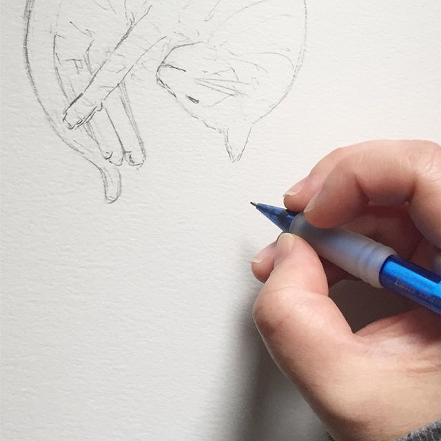 Close-up of Kimberly's hand sketching a curled up cat in pencil.