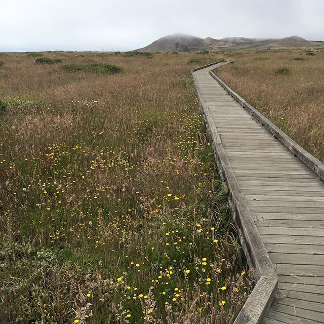 photo: Landscape of grass and flowers with wooden boardwalk