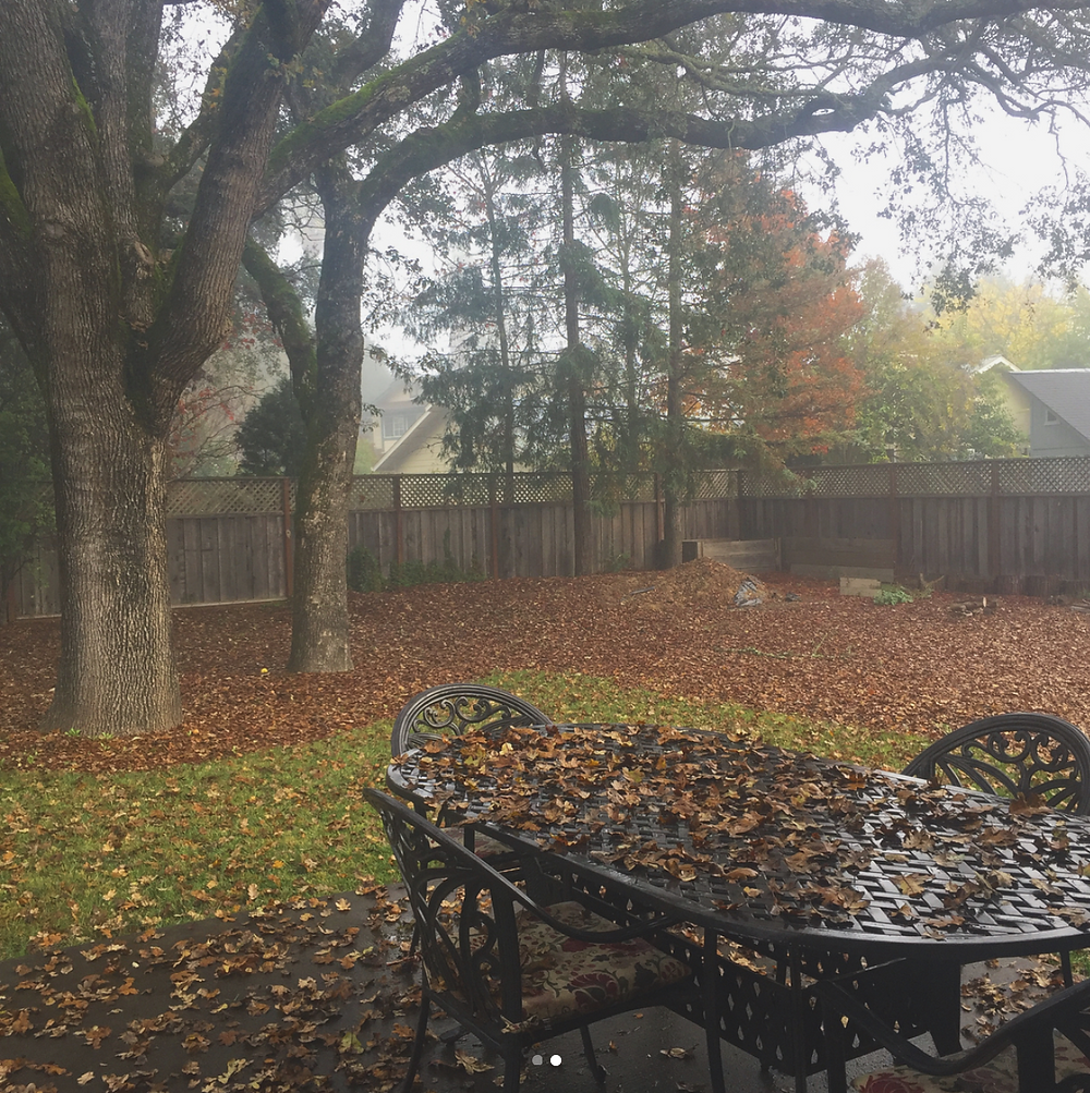 Backyard in Windsor during autumn