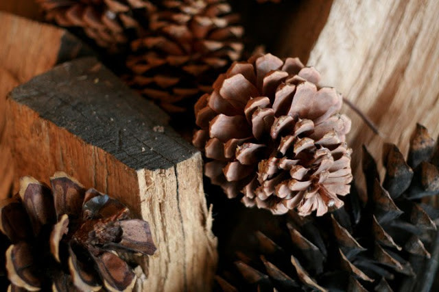 Close-up of pinecones and firewood.
