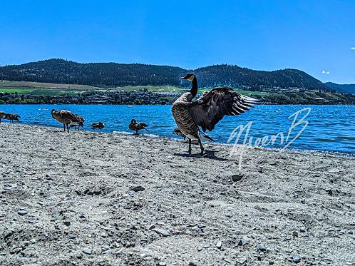 Canadian Geese Wings