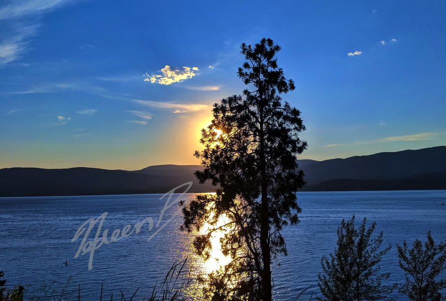 Tree Bordering Sunset